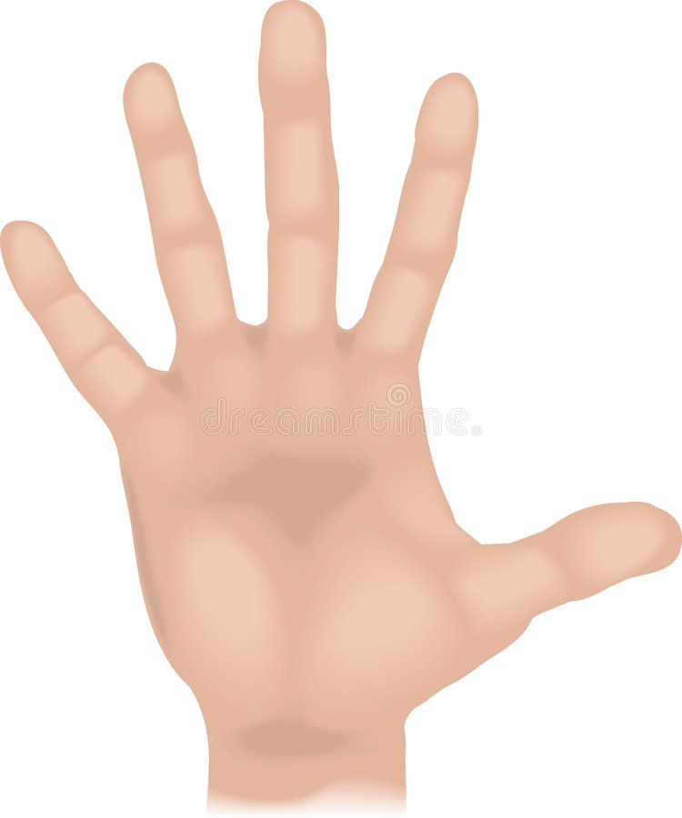 Body parts hand. An illustration of a human hand, no meshes used vector illustration