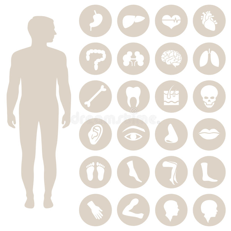 Body parts royalty free illustration