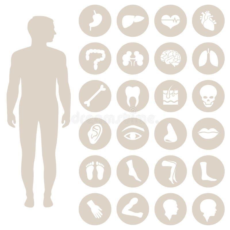 Body Parts Stock Vector Illustration Of Foot Intestine 52353888