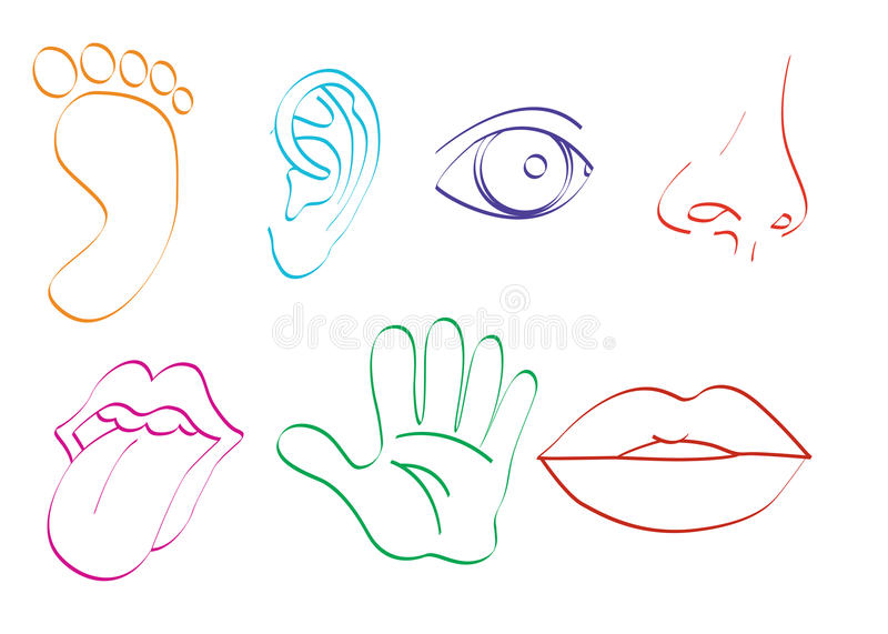 Download Body Parts stock illustration. Illustration of toes, tongue - 31902513