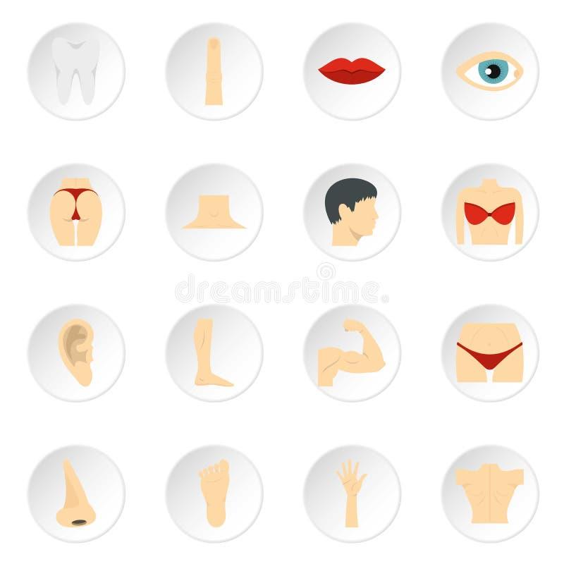 Body parts set flat icons stock illustration