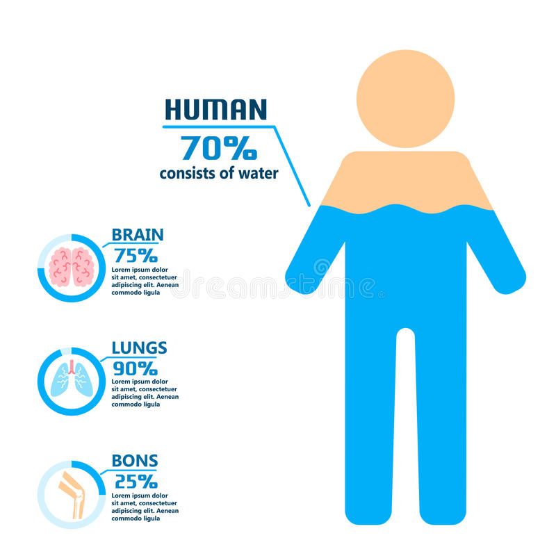 Body water drink infographics health people diet lifestyle concept brochure infochart vector illustration. Info healthcare hydrate layout report graphic royalty free illustration