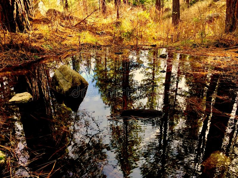 Body of Water in Forest royalty free stock photography
