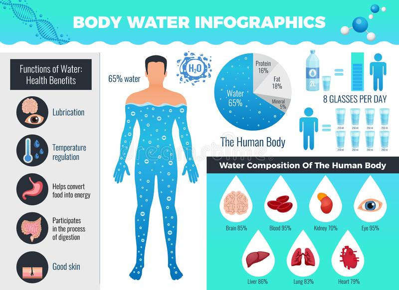 Body And Water Infographic Set. With water balance symbols flat vector illustration stock illustration