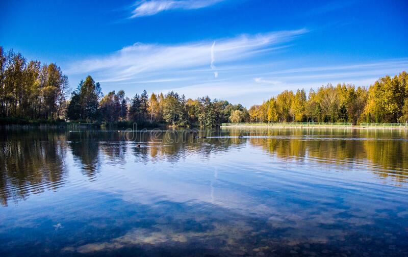 Body Of Water Near A Green Tree During Daytime Free Public Domain Cc0 Image