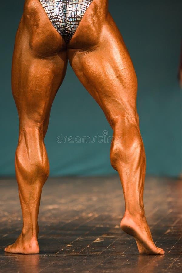 Download Bodybuilder stockbild. Bild von karosserie, hintergrund - 862545