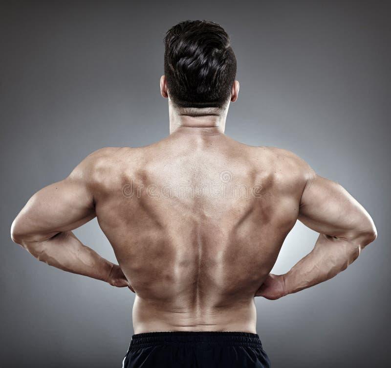Download Bodybuilder back stock image. Image of gray, shirtless - 39893185