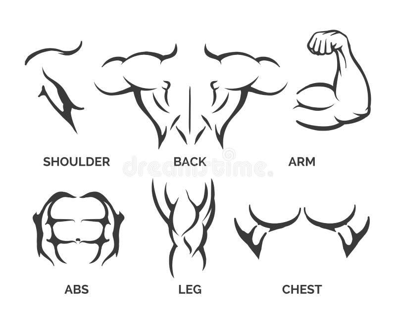 Bodybuilder części ciała ikony royalty ilustracja