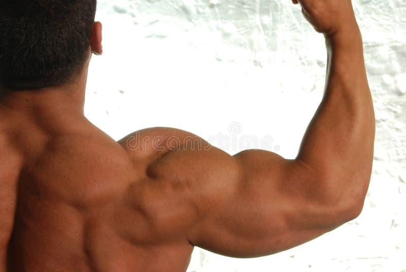 Bodybuilder, der Arm biegt stockbilder