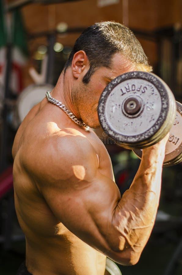 Bodybuilder, der an der Turnhalle, Seitenansicht des muskulösen Kastens, Pecs, Arme ausarbeitet stockfotos
