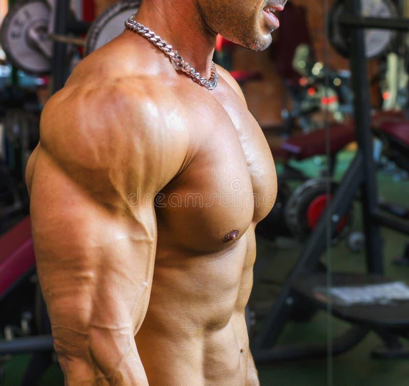Bodybuilder, der an der Turnhalle, Seitenansicht des muskulösen Kastens, Pecs, Arme ausarbeitet lizenzfreie stockfotografie