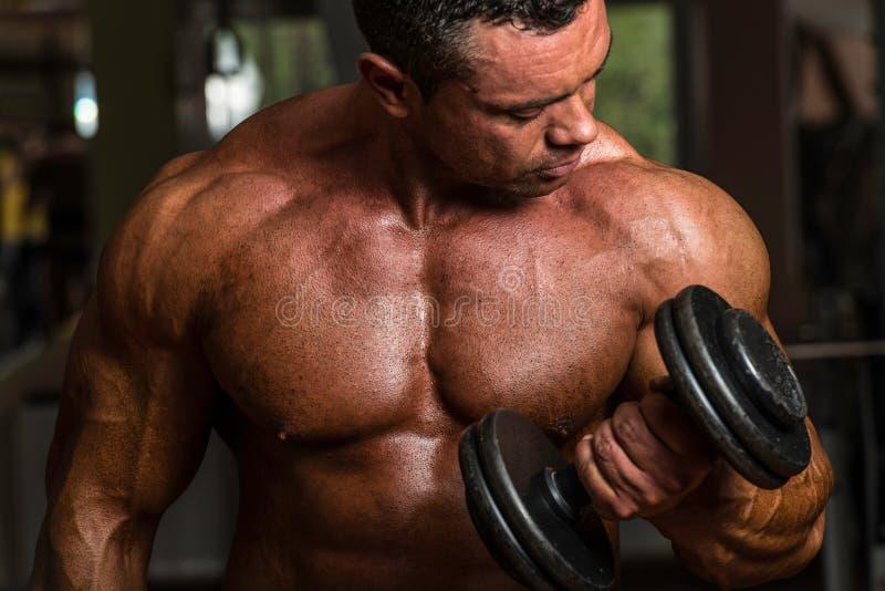Bodybuilder, der Schwergewichts- Übung für Bizeps mit Dummkopf tut stockbilder