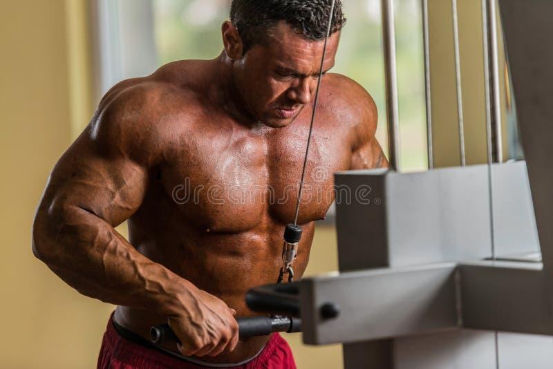Bodybuilder, der Schwergewichts- Übung für Trizeps mit Kabel tut lizenzfreie stockfotos