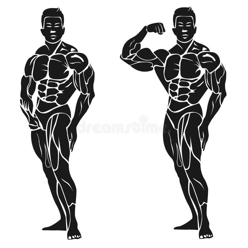Bodybuilder, der sein Bizeps, Eignungskonzept, Vektorillustration zeigt lizenzfreie abbildung