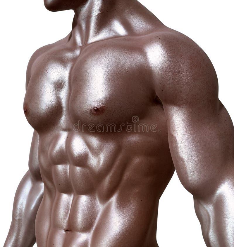 Bodybuilder, Körper-Mann, Mann, Bodybuilding lizenzfreie stockfotos