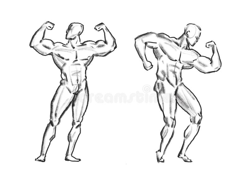 Bodybuilder Muscle Male, Sketch. Gym, Sport Concept Stock ...
