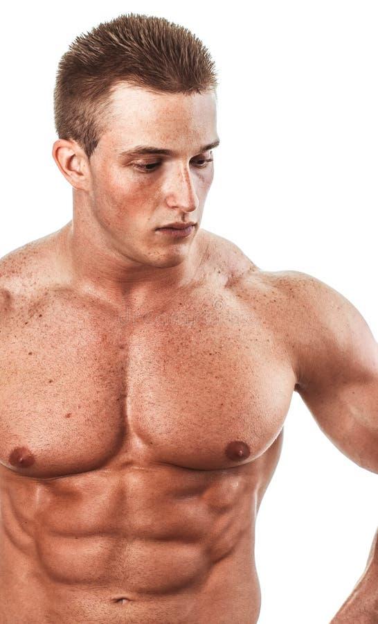 Bodybuilder. Portrait of bodybuilder, close up of torso over white background royalty free stock photos