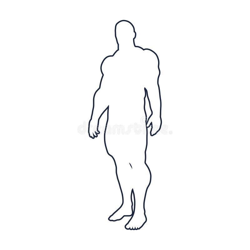 Bodybuilder sylwetki wizerunek royalty ilustracja