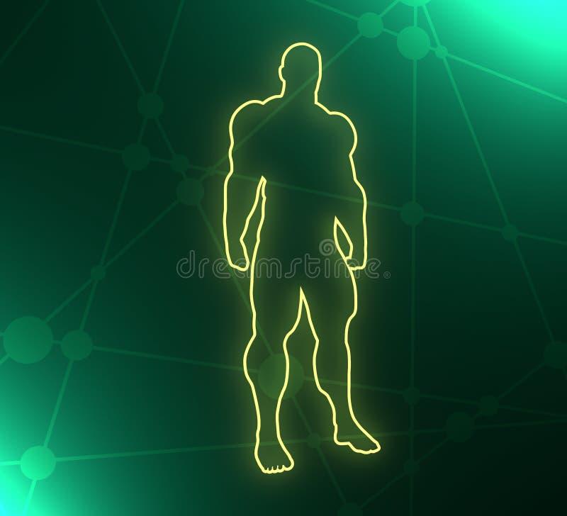 Bodybuilder sylwetki wizerunek ilustracja wektor