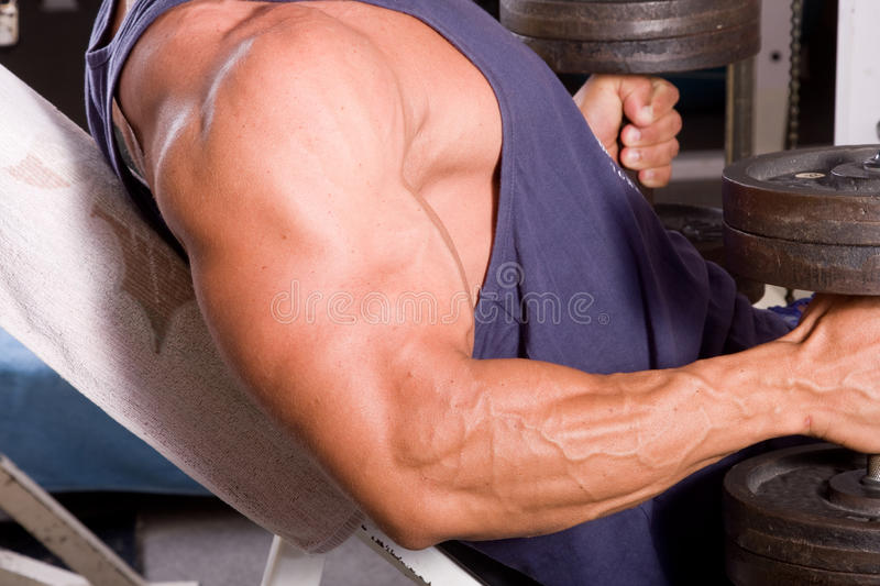Bodybuilder training royalty free stock images