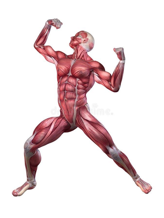 Bodybuilderhaltung stock abbildung