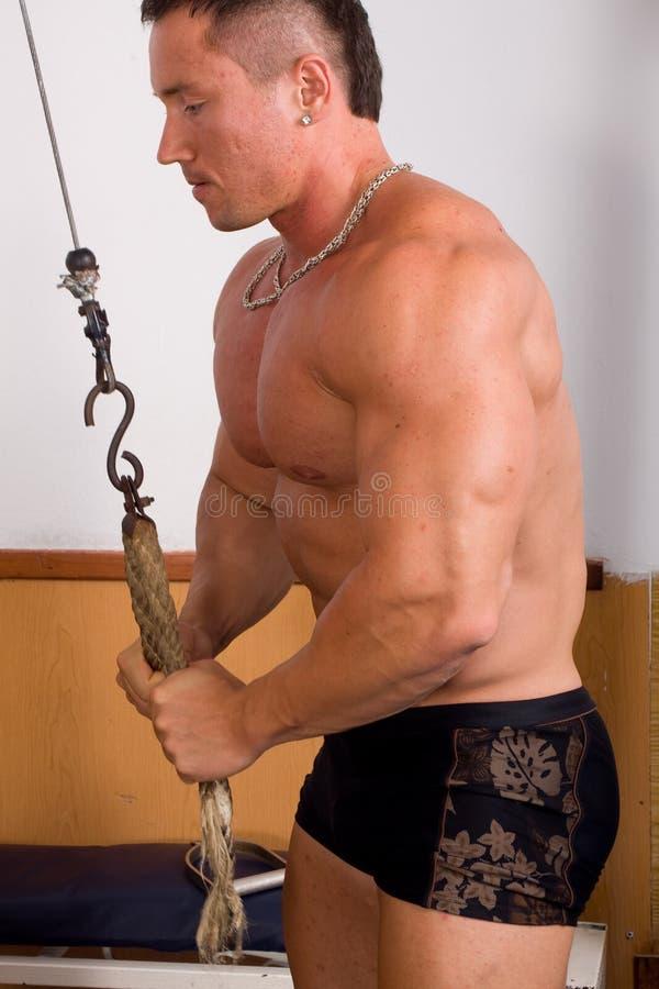 Bodybuildertraining stockbilder