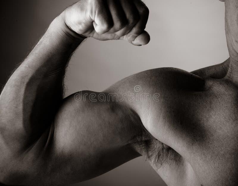Bodybuilding imágenes de archivo libres de regalías