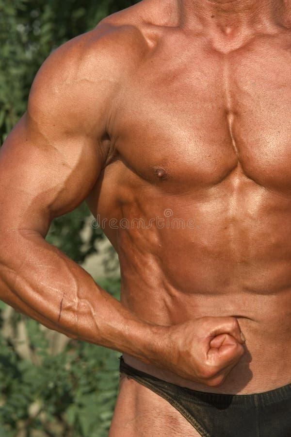 Bodybuilding fotografia stock