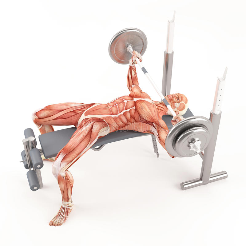 Bodybuilding gym exercising. Wide grip barbell bench press. Chest muscle group stock illustration