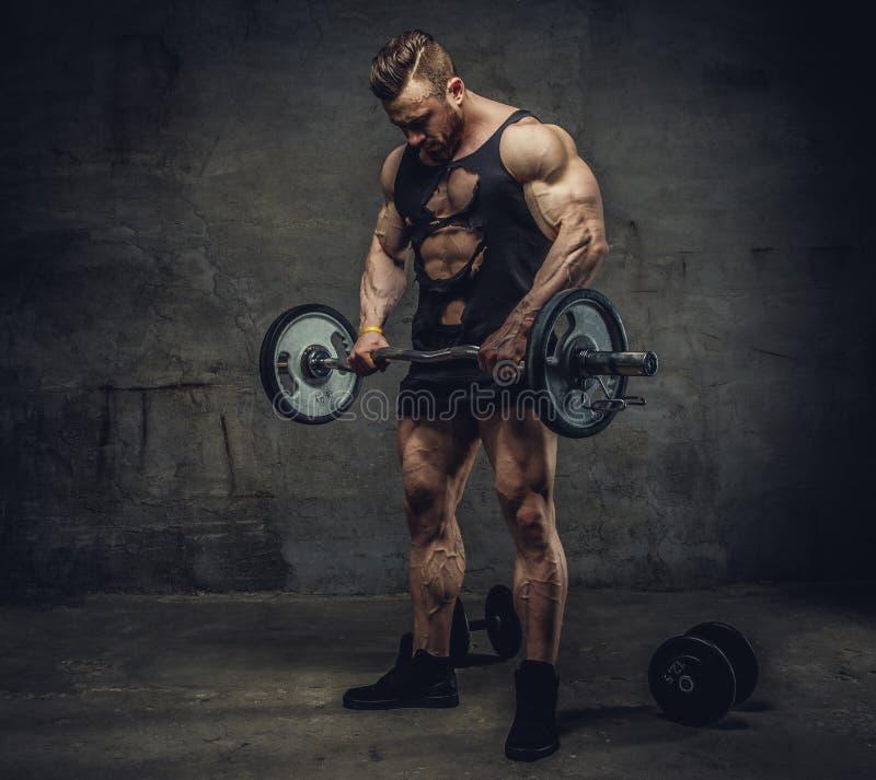 Bodybulder impresionante que hace entrenamiento del bíceps con el barbell foto de archivo libre de regalías