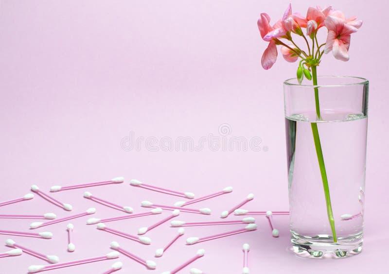 Bodziszka kwiat koralowi kolor?w stojaki w szklanej zlewce z jasn? wod? przeciw t?u delikatny koralowy kolor fotografia royalty free