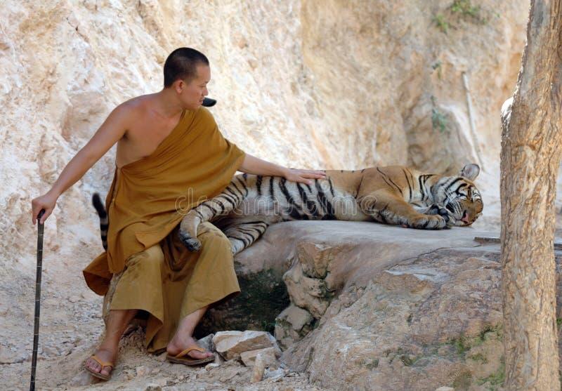 Boeddhistische monnik met Bengalen tijger, Thailand, Azië, kat royalty-vrije stock afbeelding