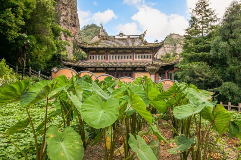 Boeddhistische tempel met taroinstallaties in de voorgrond op het Lingfeng-Gebied van Onderstel Yandang in Yueqing, Zhejiang royalty-vrije stock afbeelding