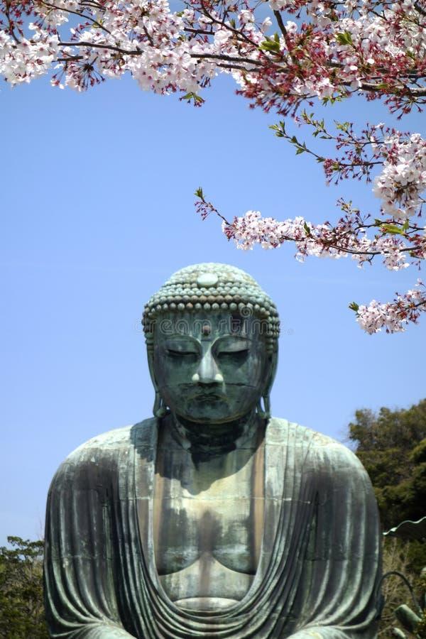 Boedha en Sakura royalty-vrije stock foto's