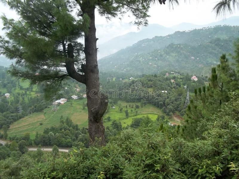 Boeiende natuurlijke scène van de vallei van Kashmir stock foto's