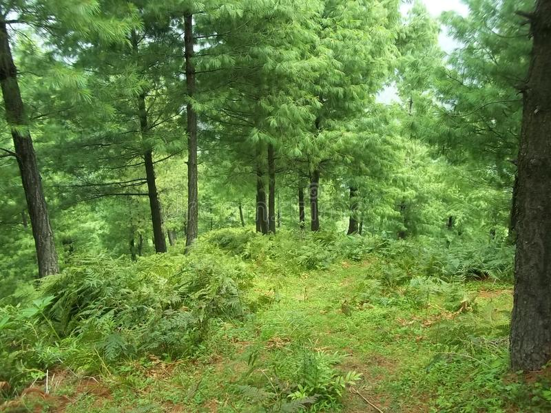 Boeiende natuurlijke scène van Sudhnoti Kashmir stock afbeelding