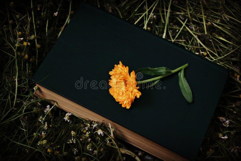 Boek en bloem stock foto