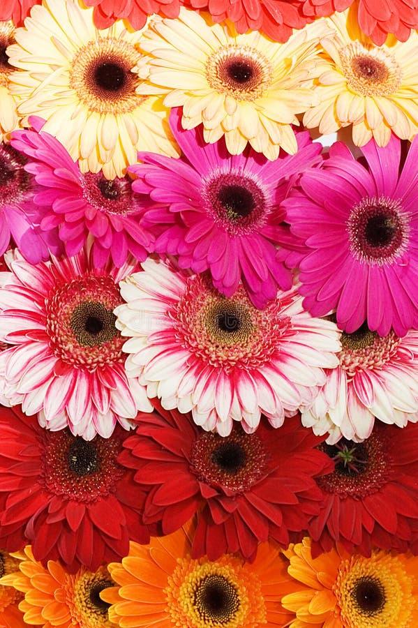 Boeket met diverse mooie bloemen royalty-vrije stock foto's