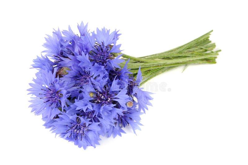 Boeket van Blauwe die Korenbloemen op Witte Achtergrond worden geïsoleerd stock afbeelding