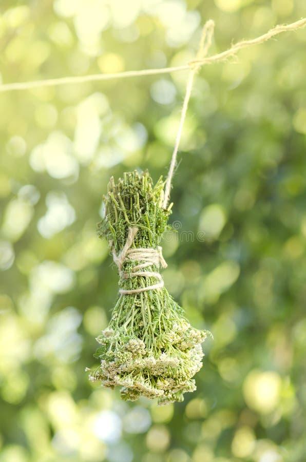 Boeket van bloeiende Yarrow Achillea-millefolium royalty-vrije stock foto