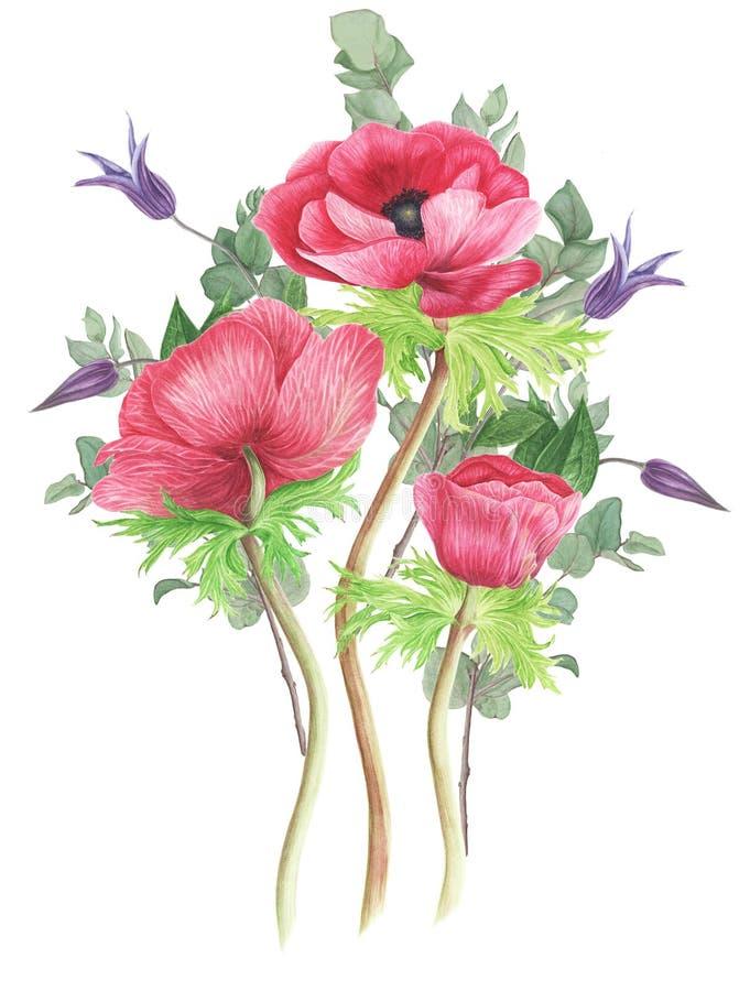 Boeket van bloemen: roze anemonen, clematissen en eucalyptus, waterverf het schilderen royalty-vrije illustratie