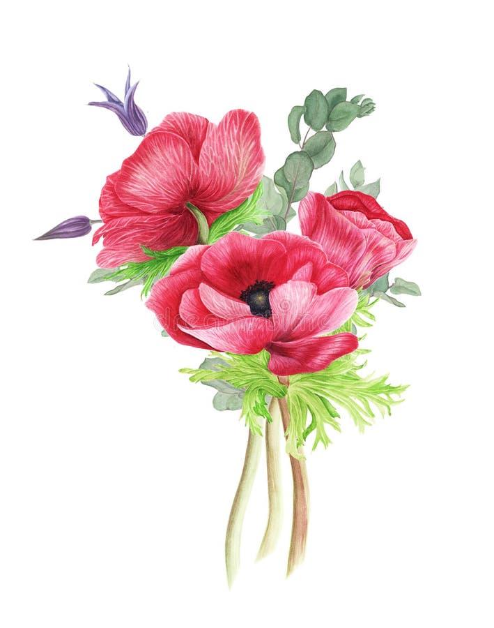 Boeket van bloemen: roze anemonen, clematissen en eucalyptus, waterverf het schilderen stock illustratie