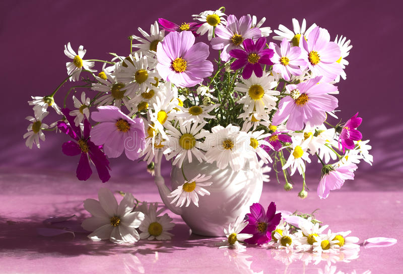 Boeket van bloemenkamille stock fotografie
