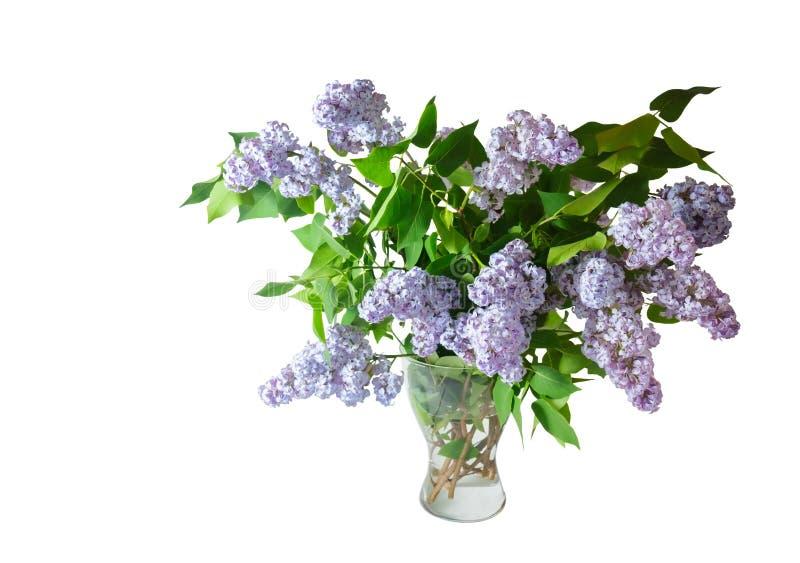 Boeket van de lente lilac bloemen op een wit worden geïsoleerd dat royalty-vrije stock afbeeldingen