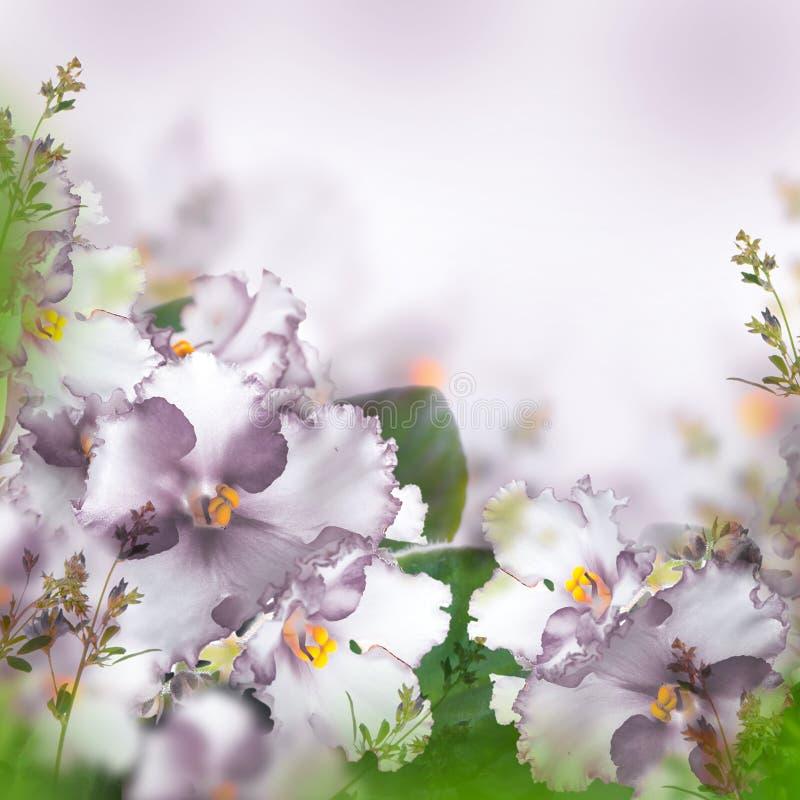 Boeket van de lenteviooltjes stock foto