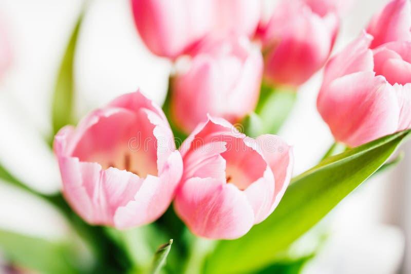 Boeket van de verse tulpen eerste lente stock fotografie