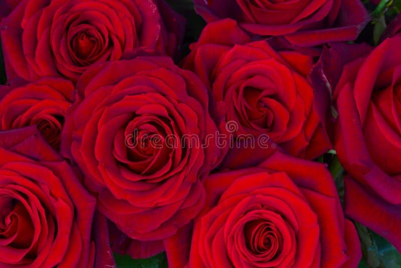 Boeket van donkerrode rozen royalty-vrije stock foto's