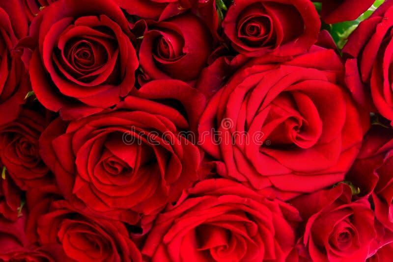 Boeket van donkerrode rozen stock afbeelding
