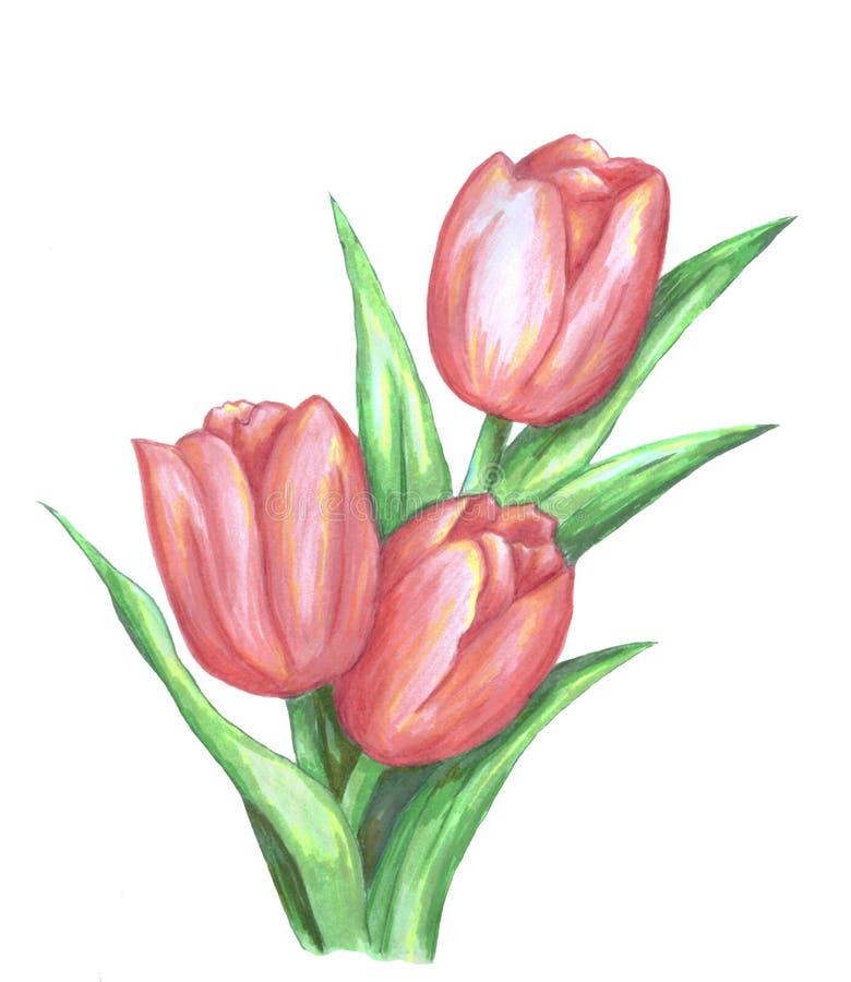 Boeket van drie rode tulpen royalty-vrije illustratie