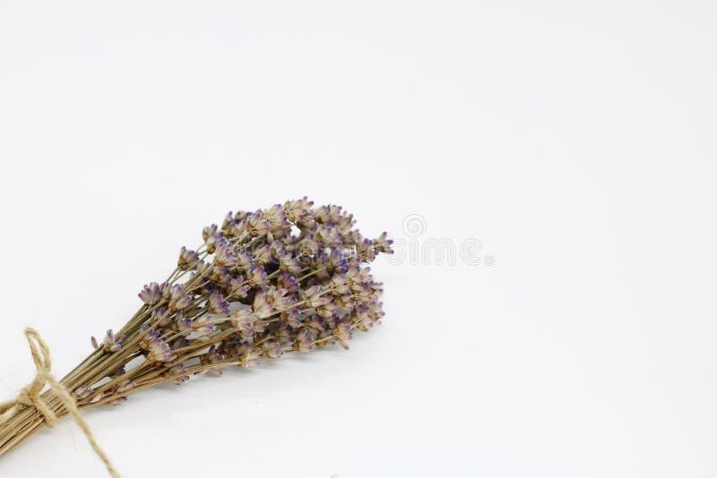 Boeket van droge lavendel op een witte achtergrond Ruimte voor tekst royalty-vrije stock fotografie